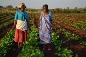 Evelyn and Rosina in a newly planted field 2015