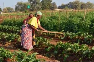 sophy tending beets